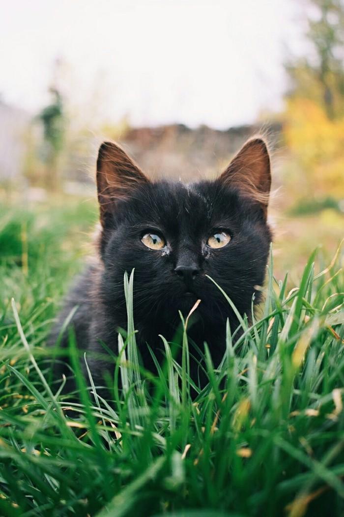 Огородние приключения с Nikon Фотография, Кот, Природа, Nikon, Длиннопост