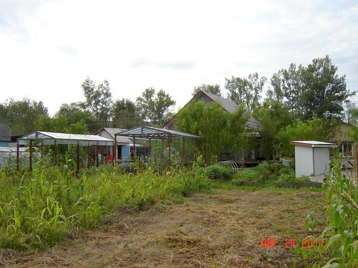 Куриный трактор или почему мы больше не пашем свой огород Длиннопост, Сельское хозяйство, Огород, Вспашка, Курица, Краснодарский Край