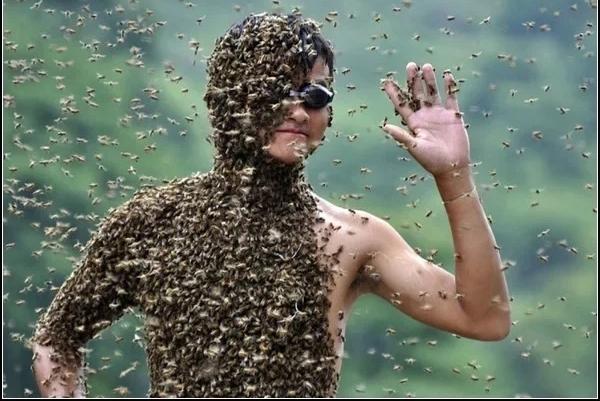 Чемпионат по приманиванию пчел в Китае Статья, Честно украдено, Пчелы, Китай, Укус, Длиннопост, Насекомые