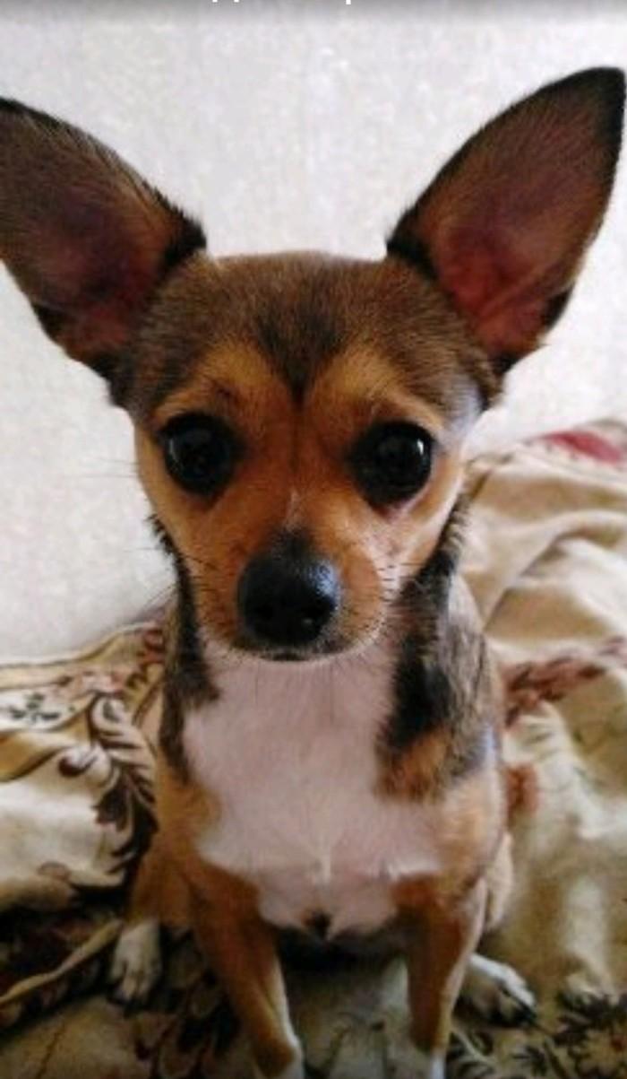 Собачья неблагодарность Собака, Воспитание детей, Длиннопост