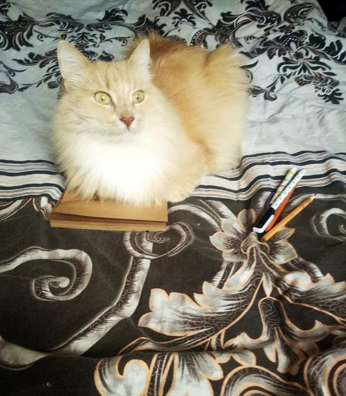 Как нарисовать котика Кот, Рисунок, Рисование