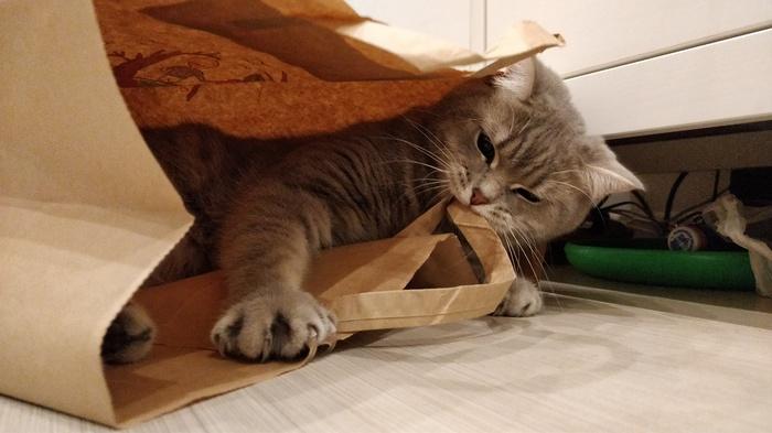 Пакет Кот, Питомец, Пакет, Кусь