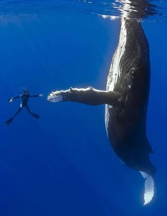 Как спят киты? Вот так. Кит, Сон, Фотография, Длиннопост