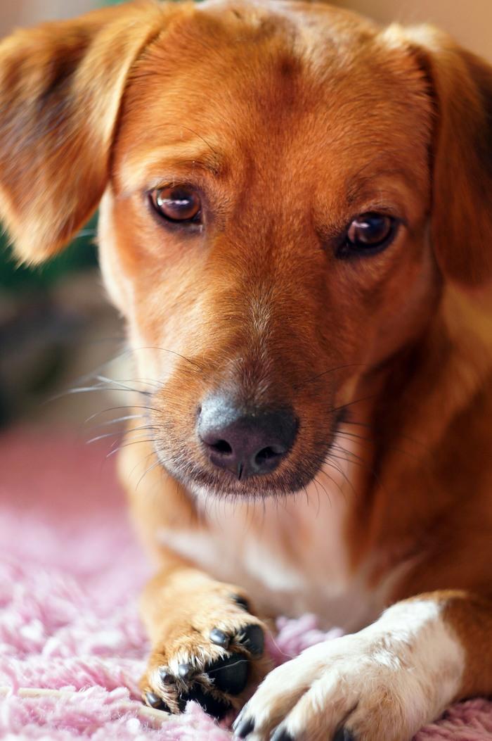 Мои Джерри и Ляля))) Животные, Собака, Питомец, Джек-Рассел-Терьер, Ягдтерьер, Как кошка с собакой, Длиннопост