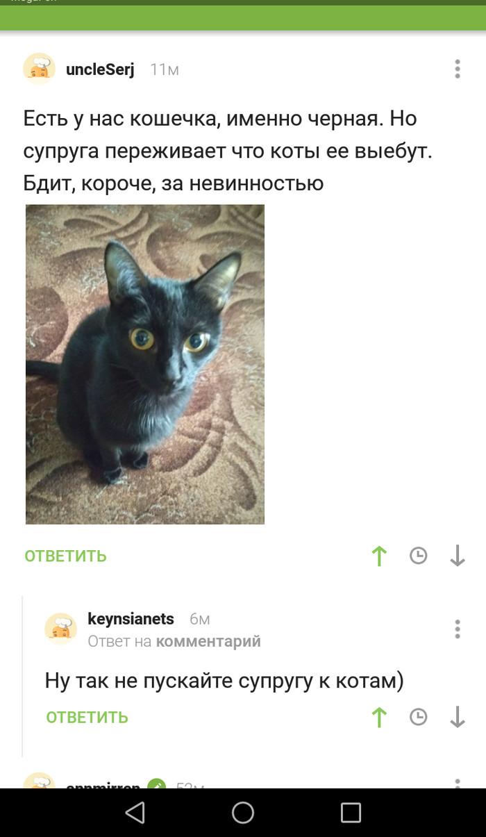 Злое**чие коты Скриншот, Кот, Комментарии на Пикабу