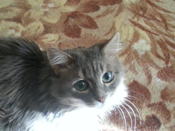 Старый кот Марик. Кот, Старый, Фотография