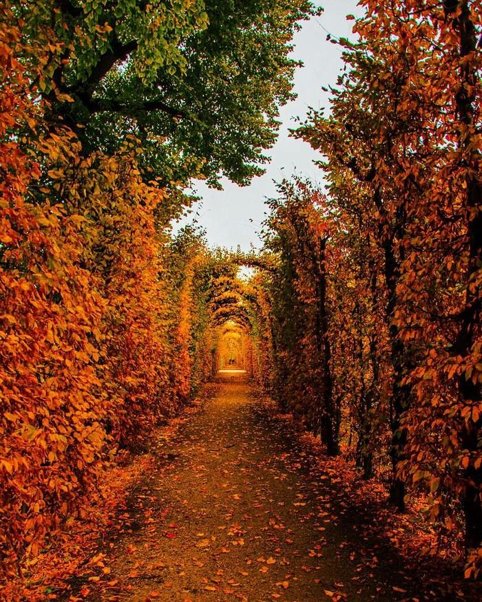 Осенний туннель в Вене, Австрия