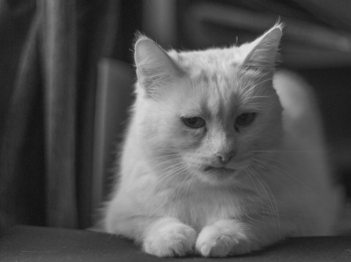 Грустная кошка Фотография, Лига фотографов, Черно-Белое фото, Кот, Начинающий фотограф