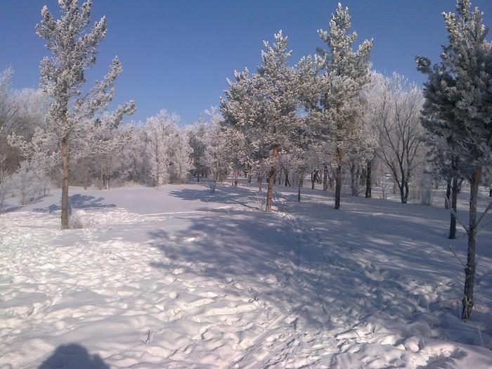 А где-то уже зима... Зима, Снег, Иней, Дерево