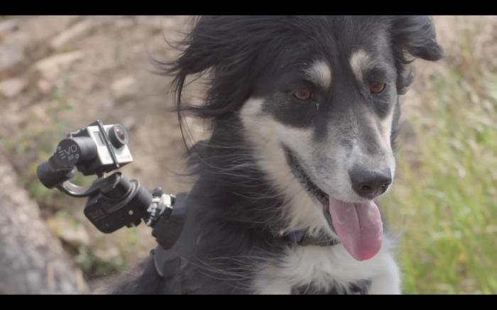 DH-пес =) Велосипед, Велоспорт, Собака, Веселье, Трейл, Треш и угар, Видео