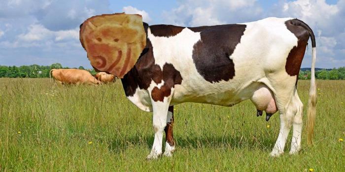 Коровка Печенька, Забавное