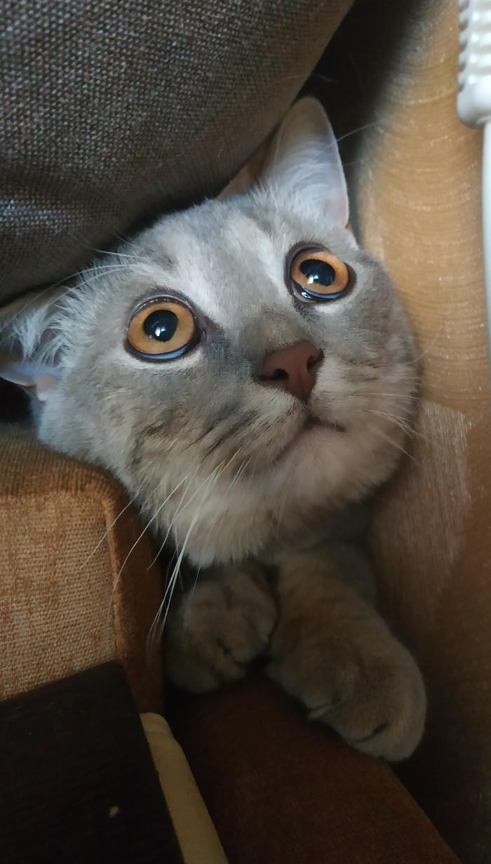 Просто для себя и по просьбе друзей Не просто кот, Мой мир, Длиннопост, Кот