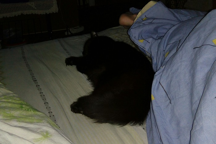 Хозяйка кровати.