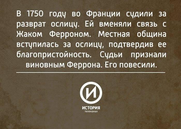 """""""Вот к ослице у нас как раз претензий нет"""""""
