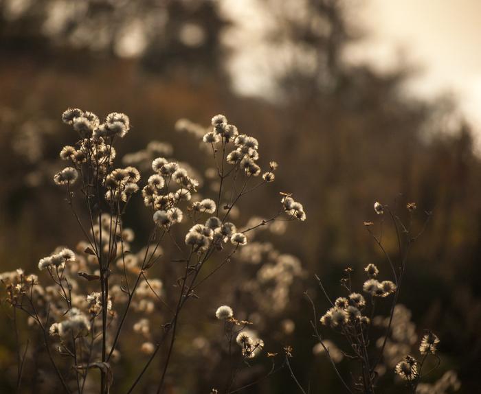 Близился закат... Nikon, Nikon D40, Nikkor, Природа, Свет