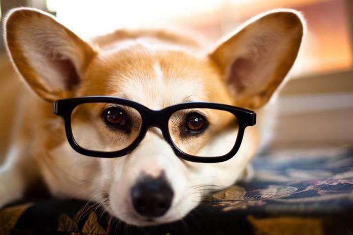 Насколько собаки похожи на человека? Собака, Человек, Кинология, Дрессировка, Dogsford, Длиннопост