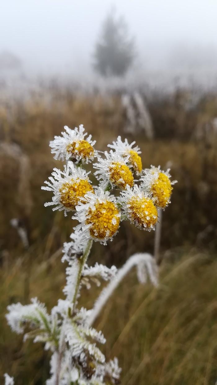 Когда туман встречается с морозом Туман, Фотография, Природа, Иней, Длиннопост