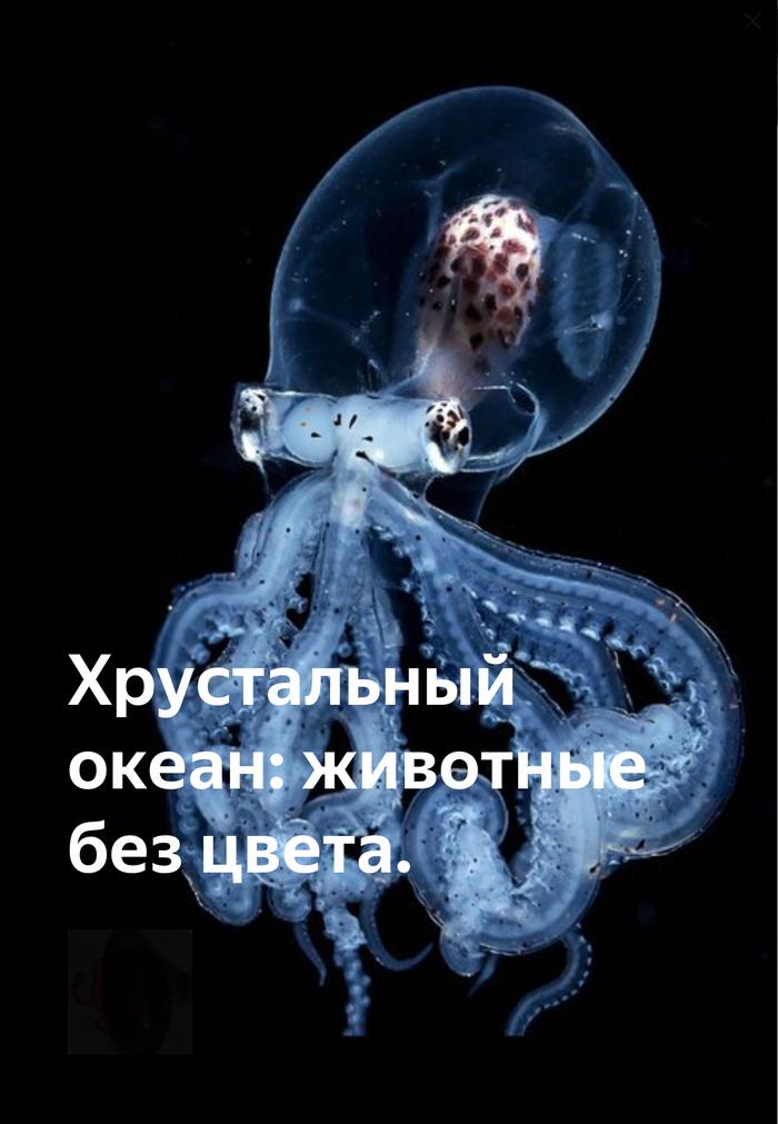 Хрустальный океан: животные без цвета. Биология, Зоология, Океан, Животные, Scientaevulgaris, Длиннопост