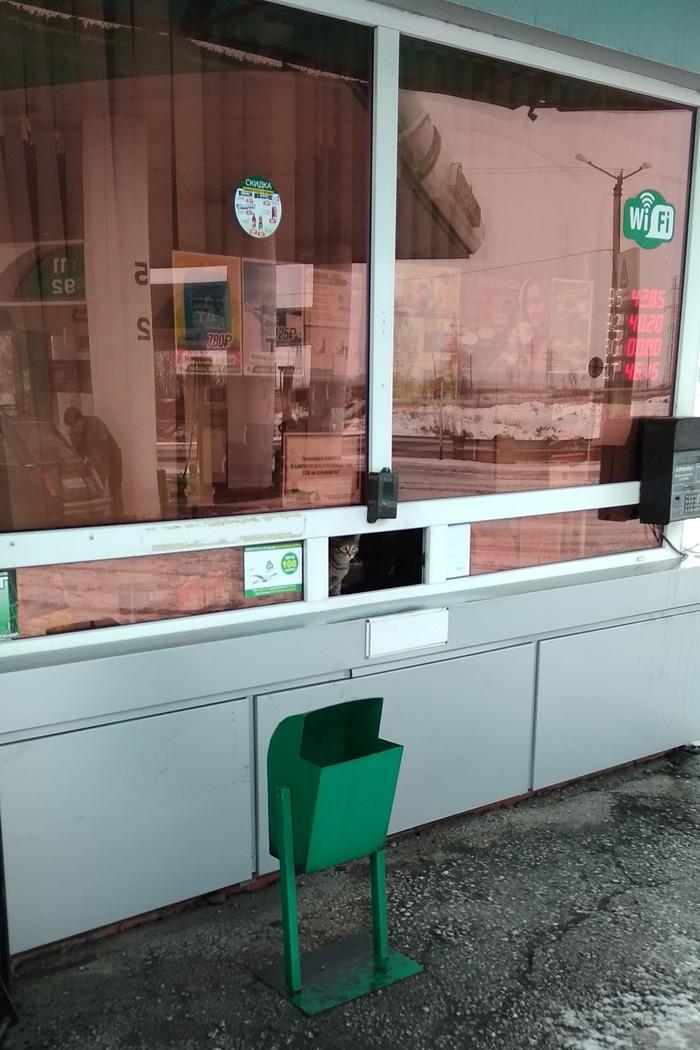 Заправщик Кот, Заправка, Кемеровская область, Фото на тапок
