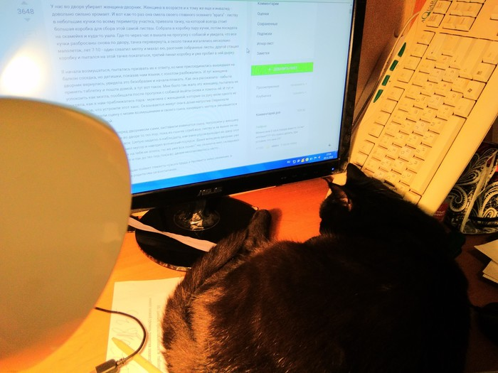 Моя личная котолампа Кот, Котолапма, Черный кот, Кот с лампой