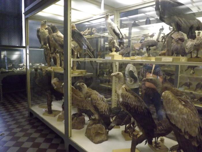 Фотографии из зоологического музея Спб 2 Череп, Зоологический музей, Таксидермия, Биология, Мамонтенок, Длиннопост