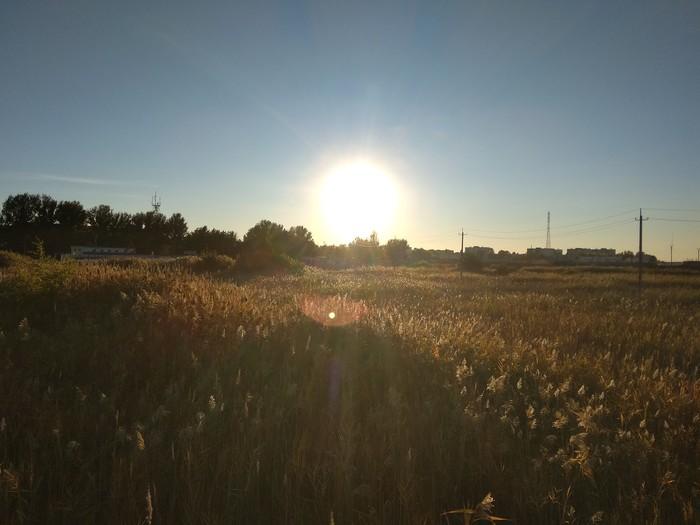 Гуляли в степи) Фотография, Степь, Красота природы, Солнце, Длиннопост
