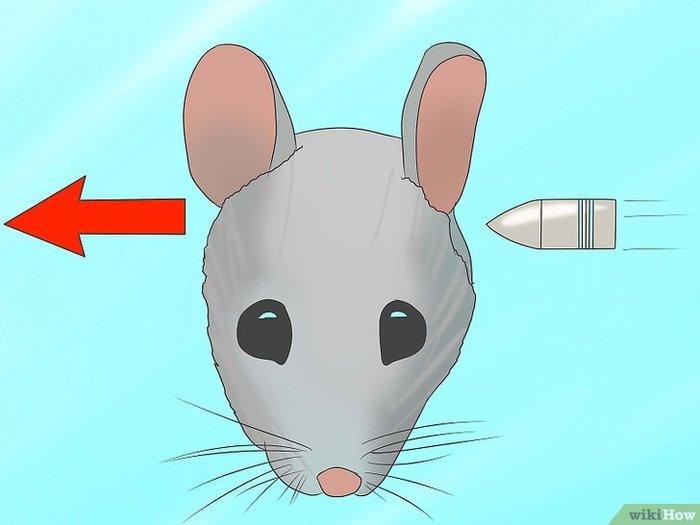 Животные на передержку. Борьба с мышами и крысами, Видео, Картинки и текст, Картинка с текстом, Текст потом картинка, Длиннопост