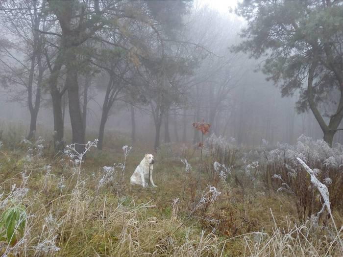 Туман Алабай, Туман, Прогулка, Фотография, Длиннопост