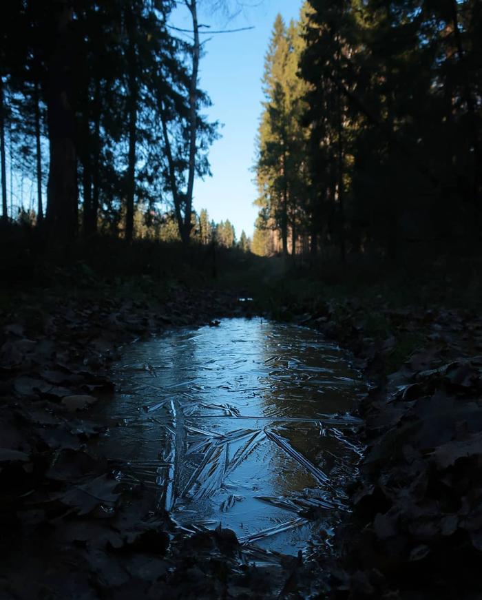 Лес Фотография, Лес, Осень, Макросъемка, Мир под ногами