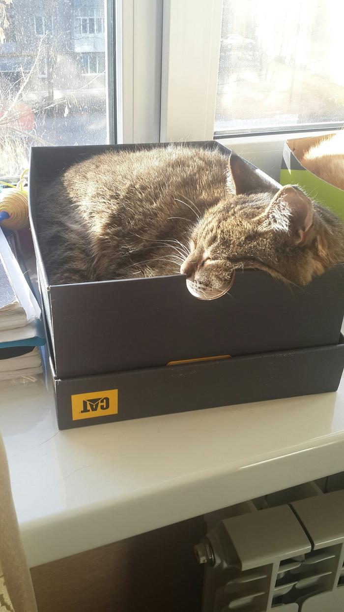 Содержимое коробки соответствует описанию