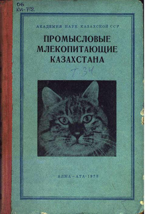 Кот смотрит с осуждением. Дикие коты, Смешное фото, Картинки