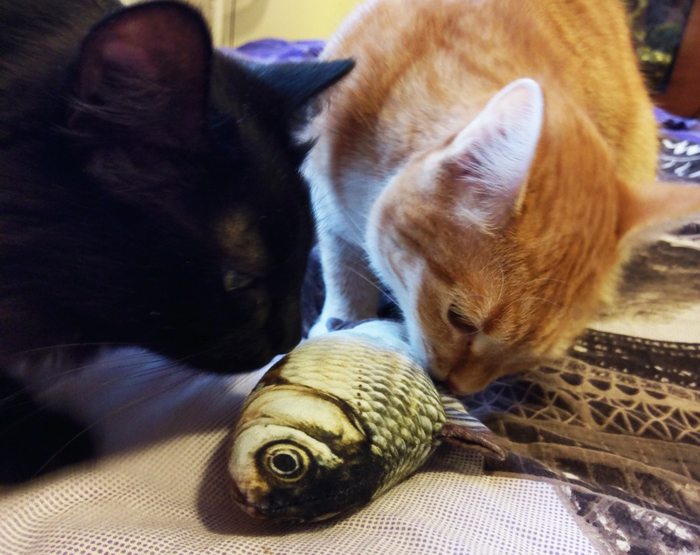 Коты и карп. Кот, Карп, Мягкая игрушка, Моя прелесть, Длиннопост