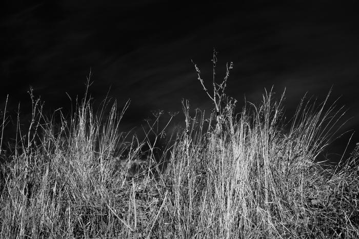 Мезень, прогулка по центру 2/2 Фотография, Архангельская область, Мезень, Север, Истории, Длиннопост