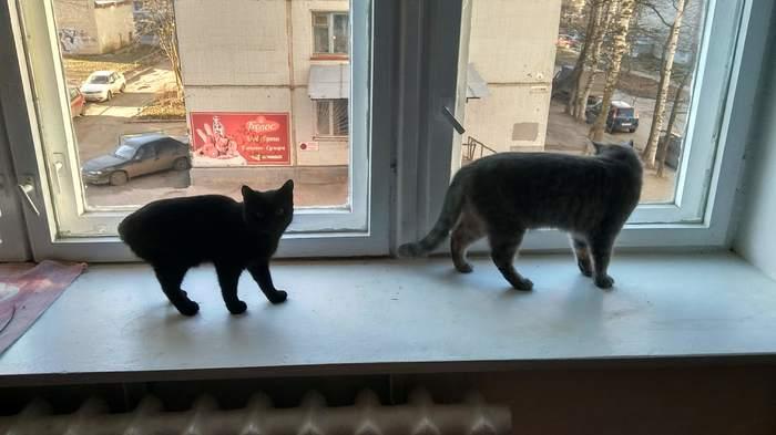 Кошка Штука Кот, Домашние животные