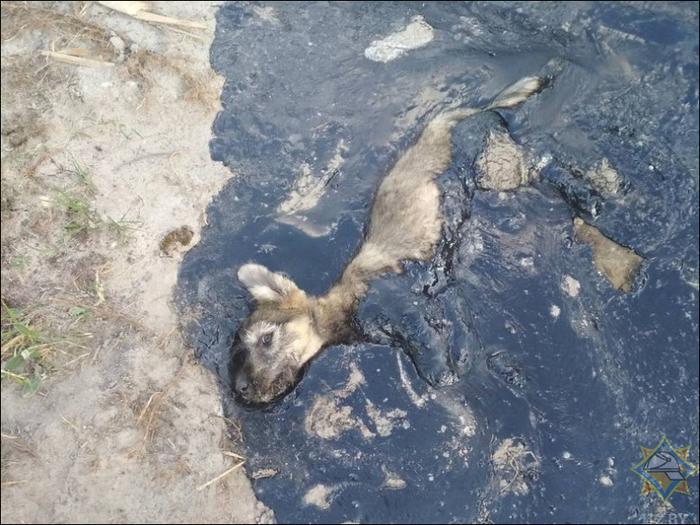 Продолжение истории пса, который завяз в битуме Собака, Спасение, Собачьи будни, Любовь к животным, Помощь животным, Длиннопост