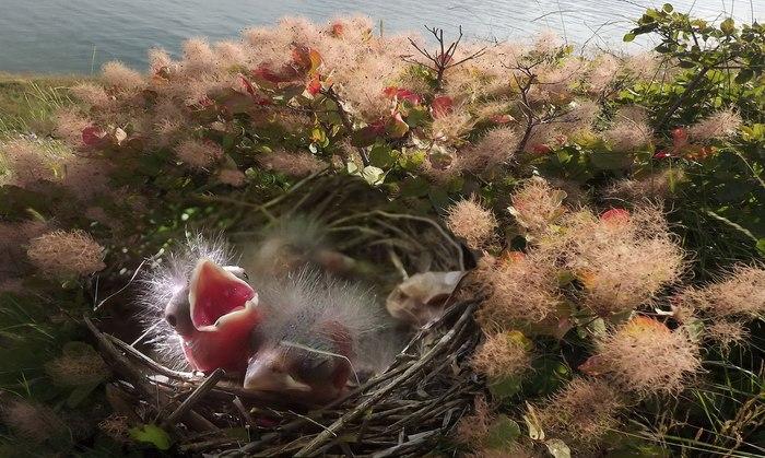 Проголодался Птенец, Гнездо, Фотография