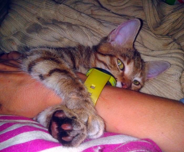 Котенок, продолжение. Кот котенок бездомный, Котомафия, Лечение, Передержка, Длиннопост
