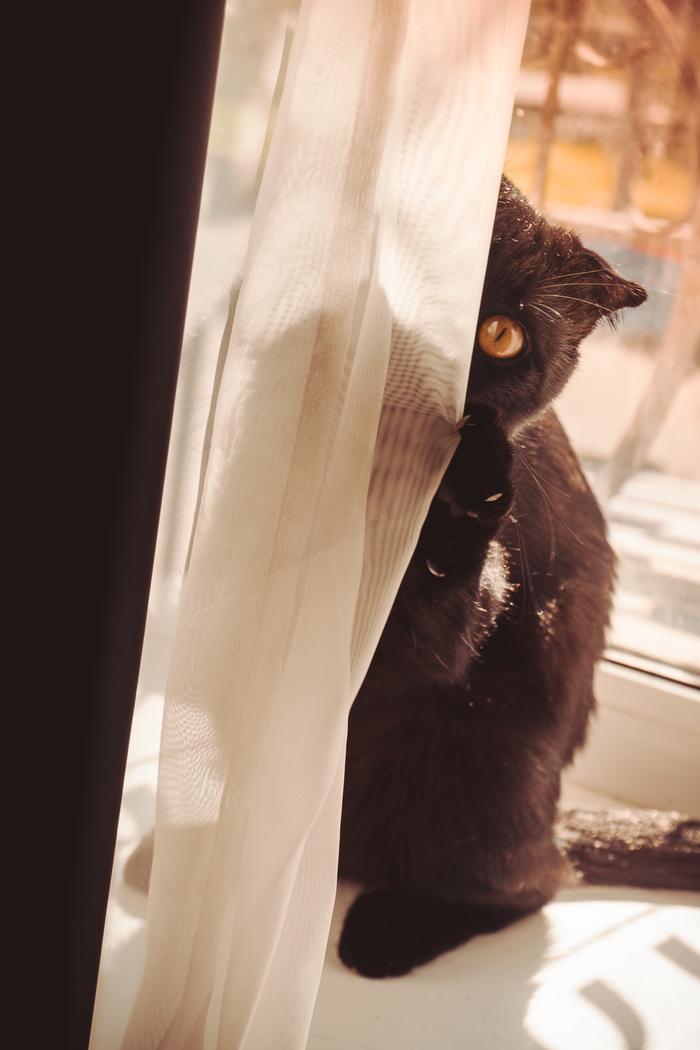 Кот по имени Кот