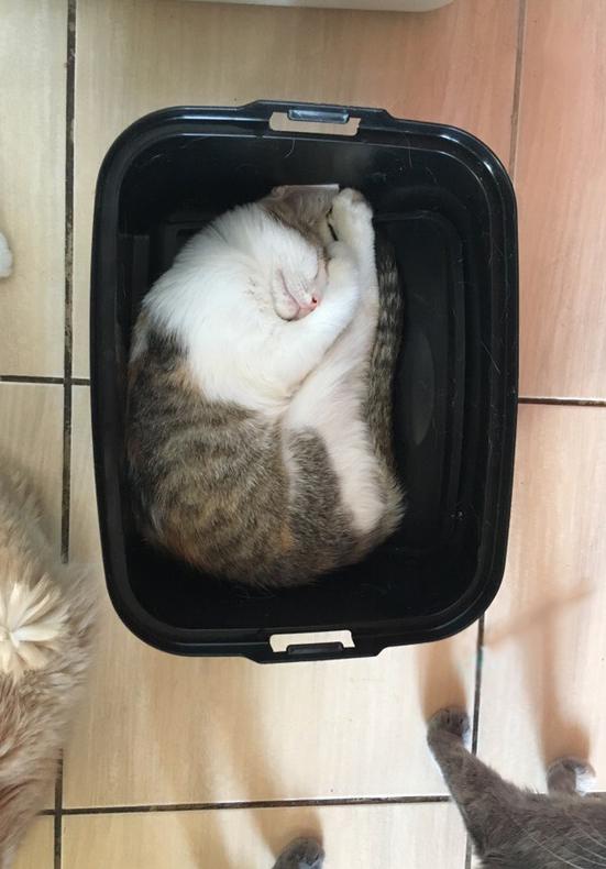 Мне и так удобно Кот, Котята, Милота, Приют для животных, Приют, Смешное, Котомафия, Длиннопост