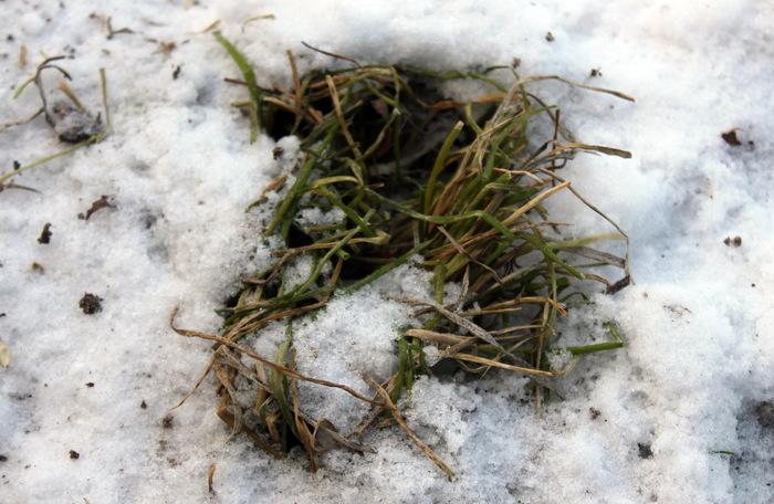 Спортивное садоводство #1. Лук к Новому году. Огород, Огород на подоконнике, Растения, Зима, Зеленый лук, Новый Год, Длиннопост