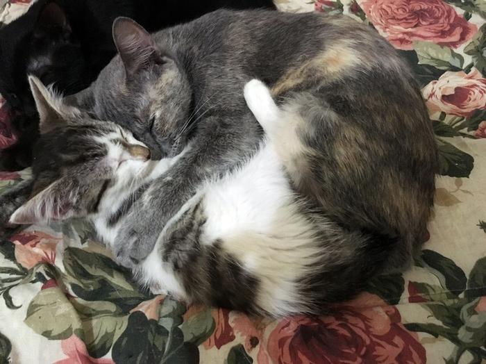 Чужих котят не бывает Кот, Приют для животных, Приют, Котята, Мама, Котомафия, Милота