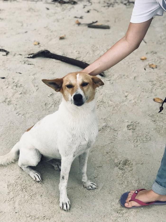 Хорошие мальчики (и девочки) острова Самуи Таиланд, Хороший мальчик, Самуи, Собака, Длиннопост
