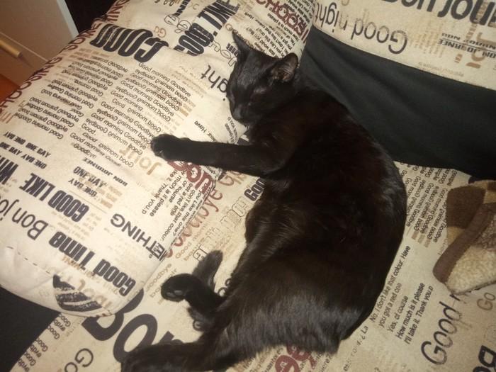 Почему кошки выбирают необычные места для сна? Черный кот, Из сети, Эзотерика, Разные приметы, Бессонница, Длиннопост, Кот