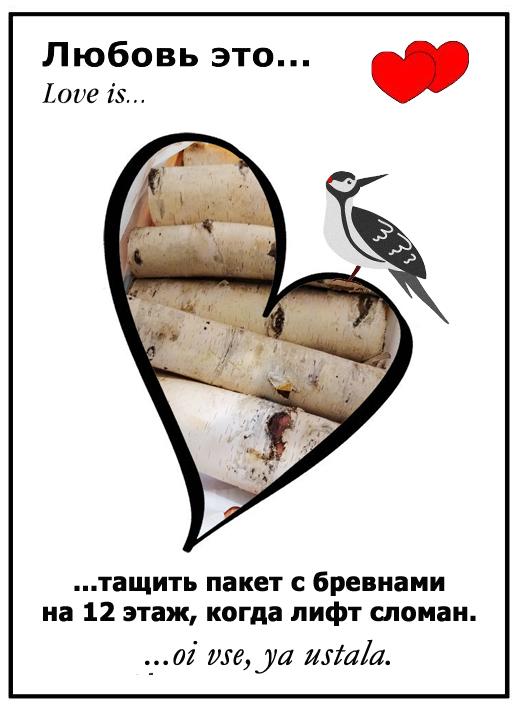 Любовь зла Дятел, Большой пестрый дятел, Юмор, Love is, Любовь