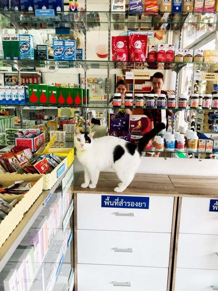 Работник месяца в тайской аптеке