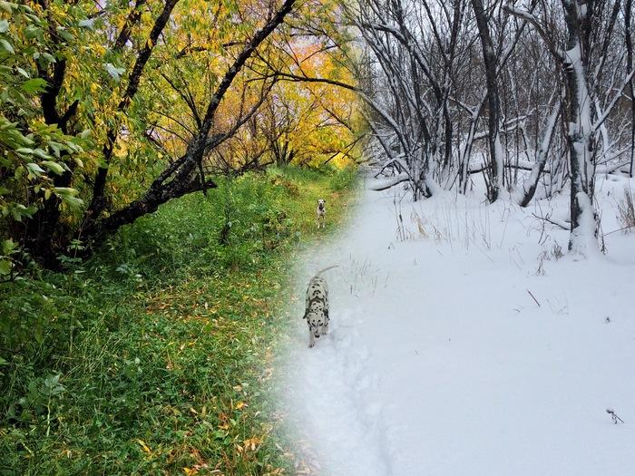Прогулка с собакой в разное время на одном месте Фотография, Сведение, Осень, Зима, Прогулка, Долматинец, IPhone 5s, Собака