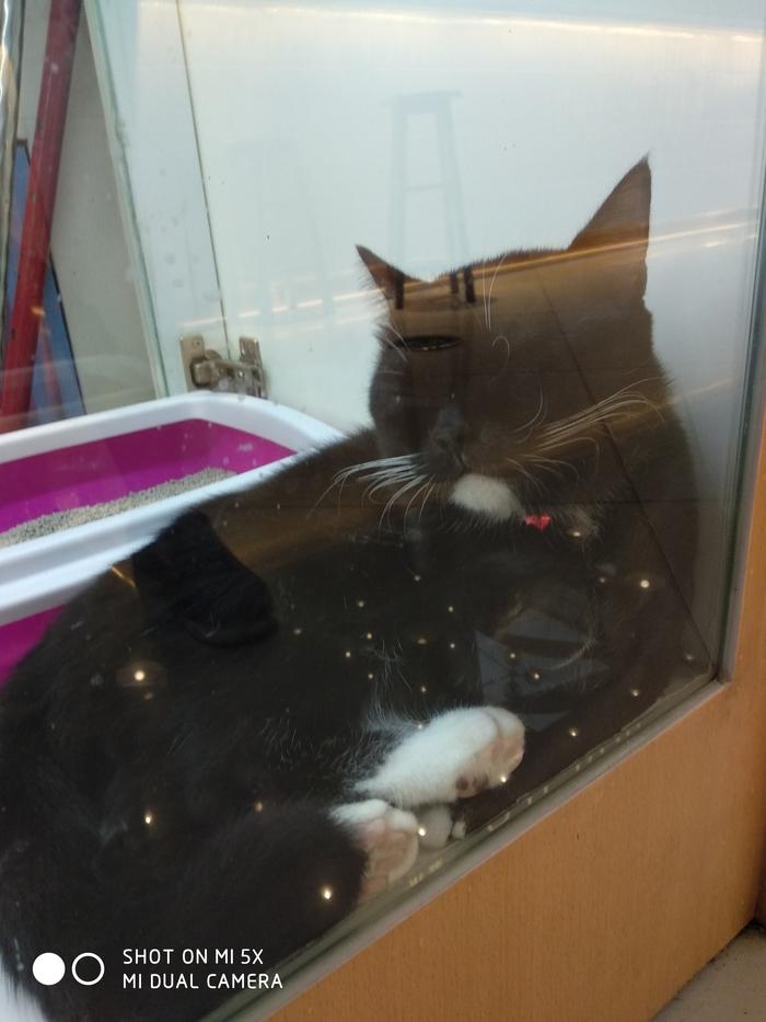 Просто немного котиков в ленту Кот, Зоомагазин, Длиннопост