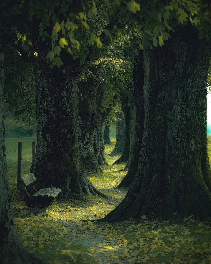 Заколдованный лес