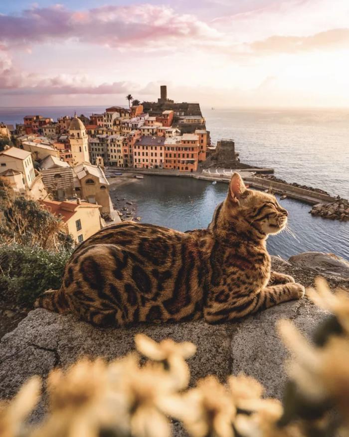 Закат с котом вдвойне красивее