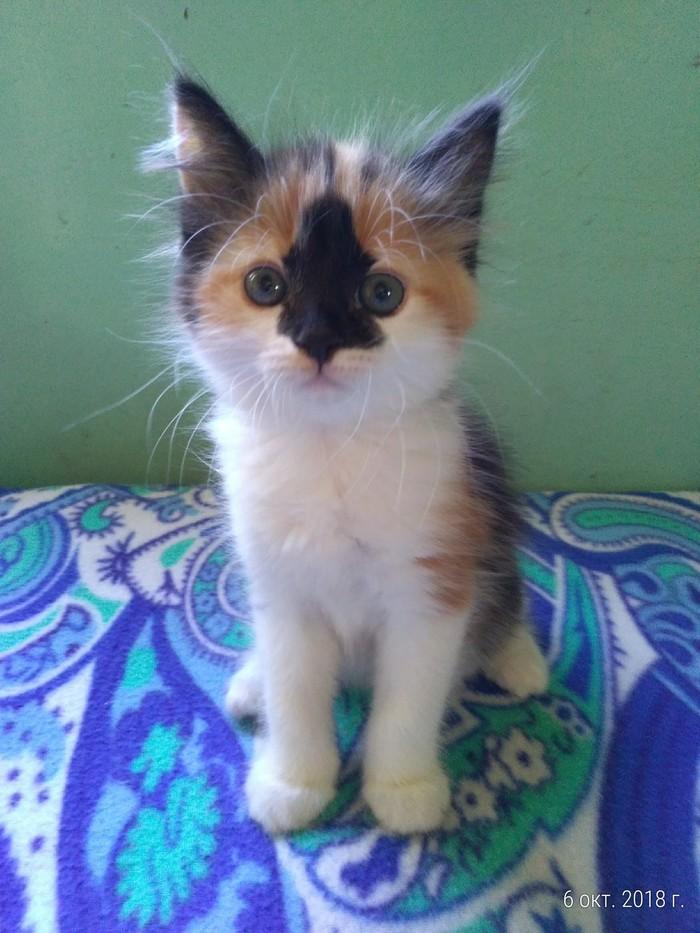 Котёнок Калининградская область, Зеленоградск, Потерялся кот